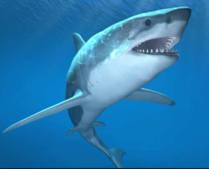 What I Learned from a Shark