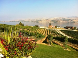 Lake Chelan Wineries